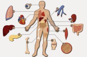 229-organ-donation